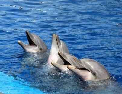 Canto de delfines