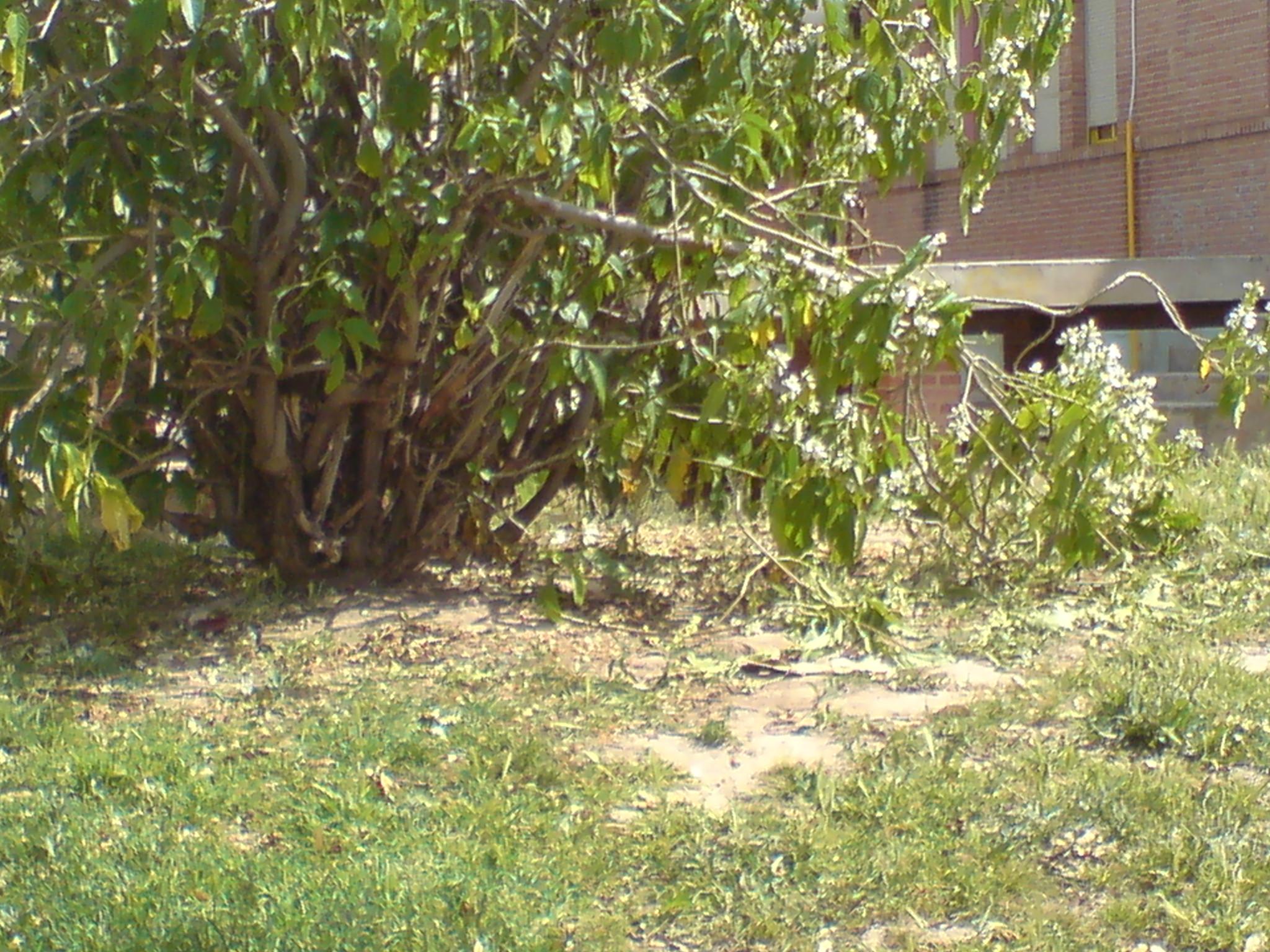 Arbustos sin cuidados en jard n malaspina de el bojar for Arbustos en jardines