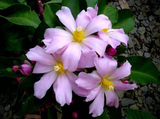 Imagenes de flores bonitas auto design tech - Fotos de flores bonitas ...