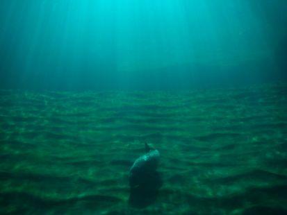 Por el fondo del mar