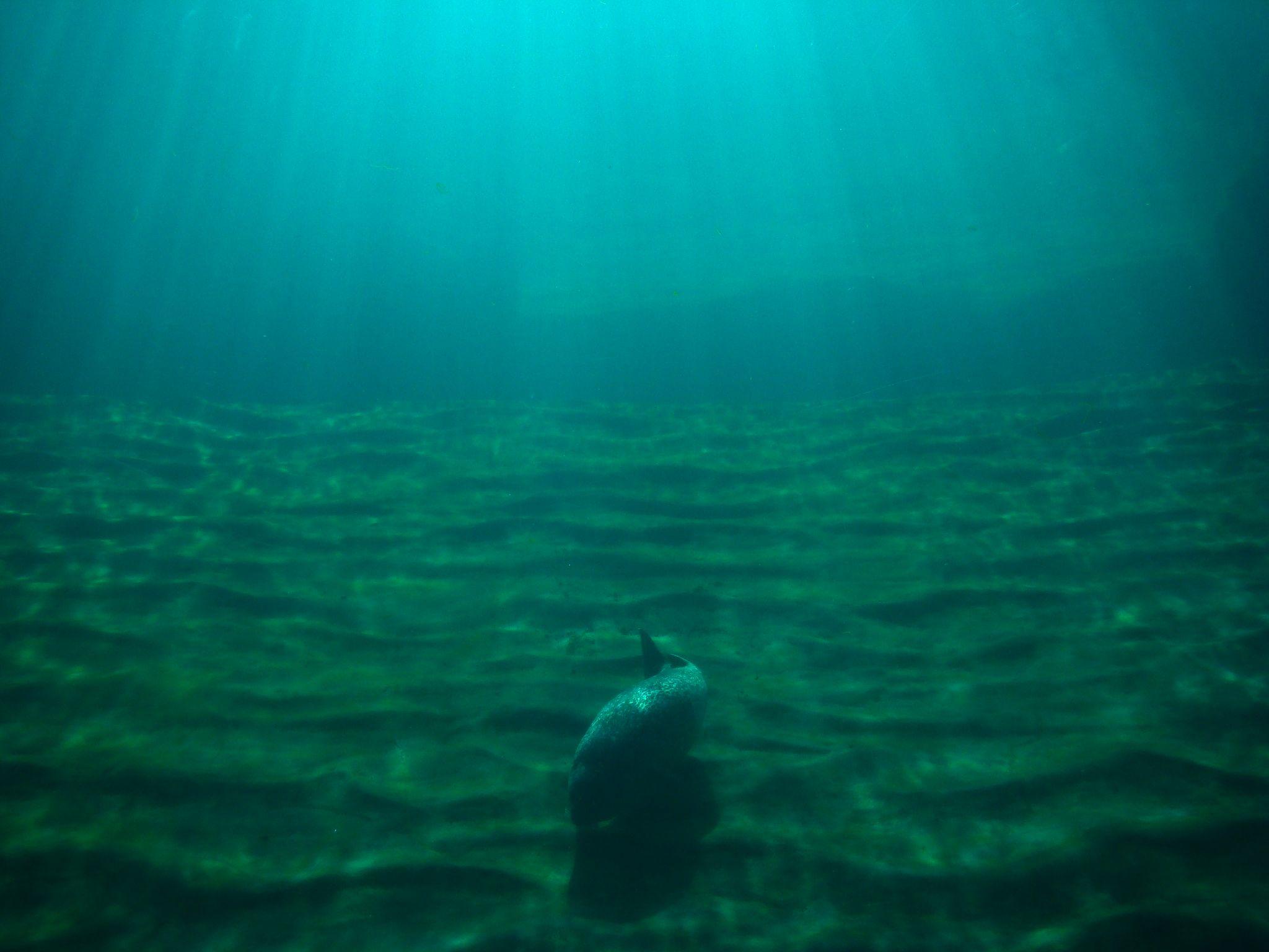 Fondo del mar imagui - Fotos fondo del mar ...