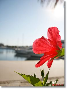 El mar, El Sol y la Naturaleza