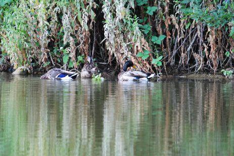 Pradita junto al estanque