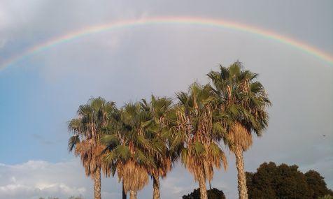 Palmeras coronadas por el arco iris