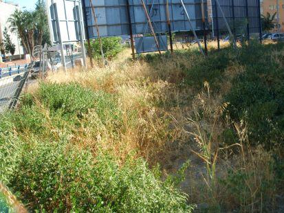Solar lleno de suciedad y ratas frente a San P�o X