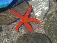 Patricio, estrella en Cabo de Gata