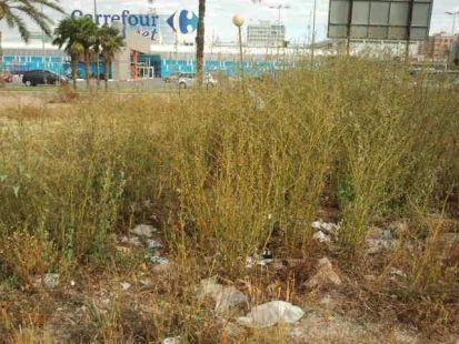 P�simo estado del descampado que hay frente a Carrefour Zaraiche