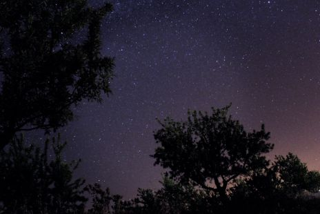 Estrellas y almendros