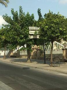 Se�alizaci�n tapada por los �rboles en la Avenida Infante Juan Manuel