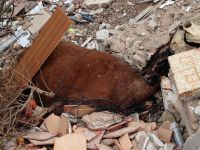 Barranco lleno de escombros y animales muertos cerca de San Isidro
